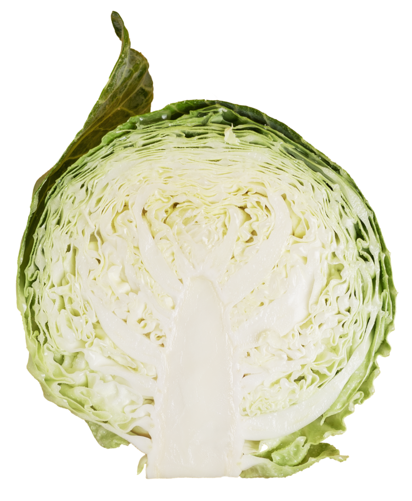 cabbage img