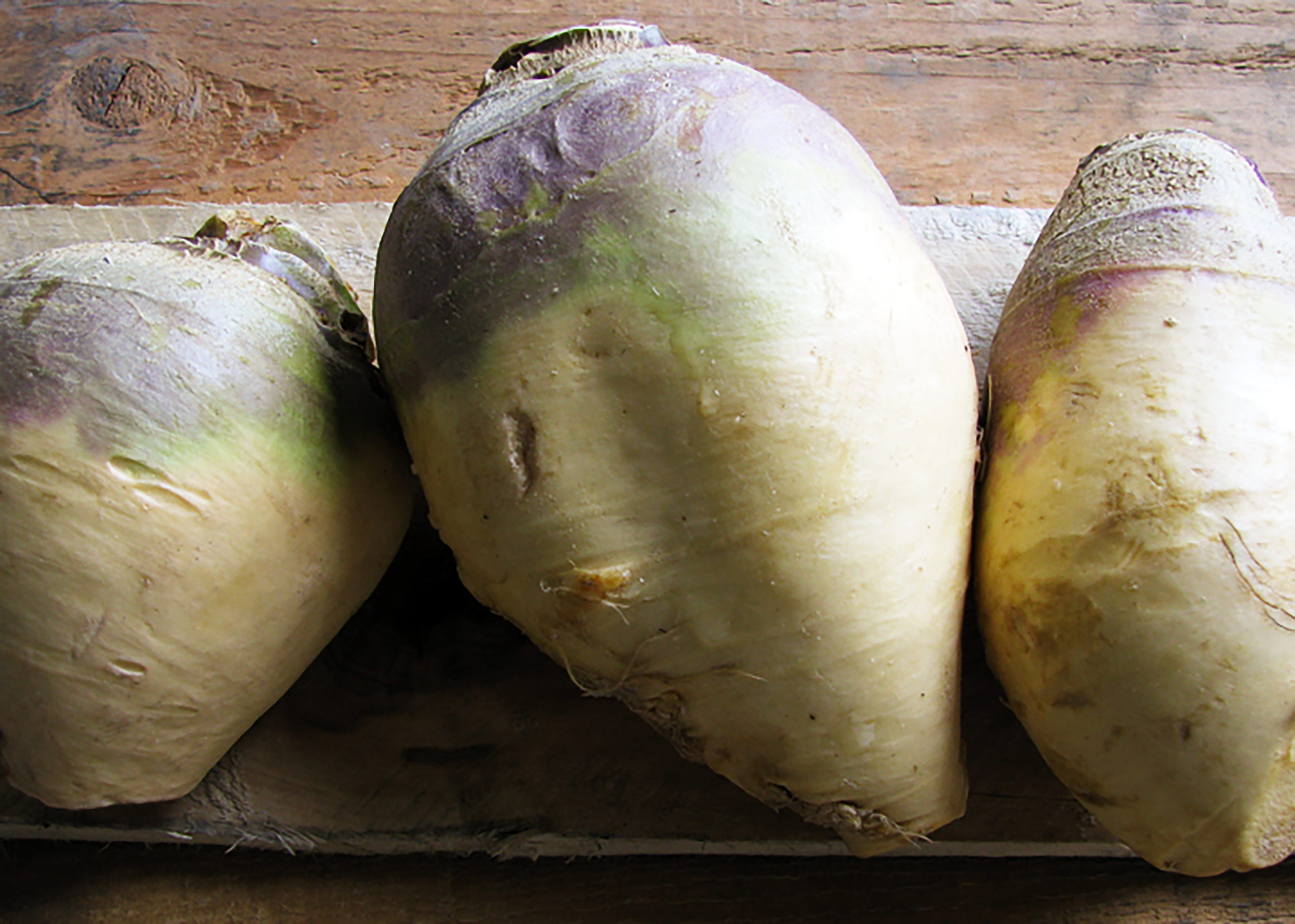 slightly purple topped rutabagas with longer yellow bodies pulled from the ground.